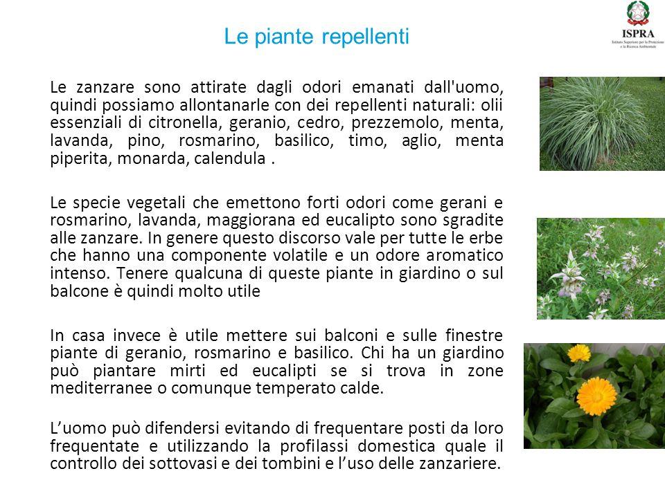 Le piante repellenti
