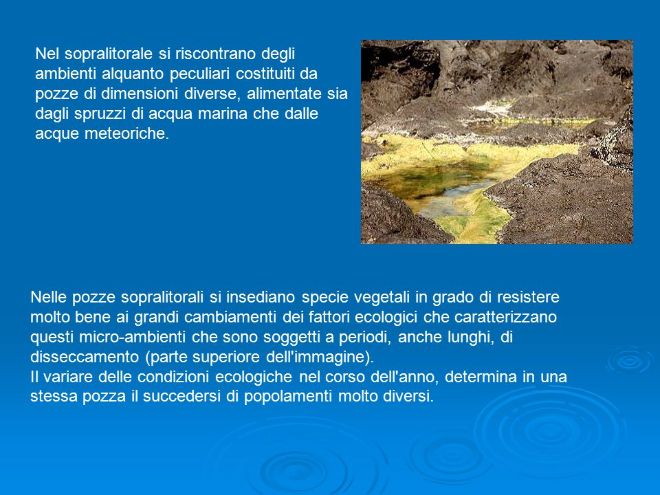 Nel sopralitorale si riscontrano degli ambienti alquanto peculiari costituiti da pozze di dimensioni diverse, alimentate sia dagli spruzzi di acqua marina che dalle acque meteoriche.