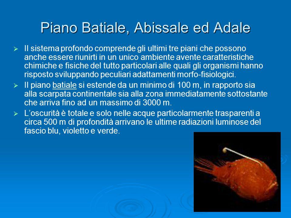 Piano Batiale, Abissale ed Adale