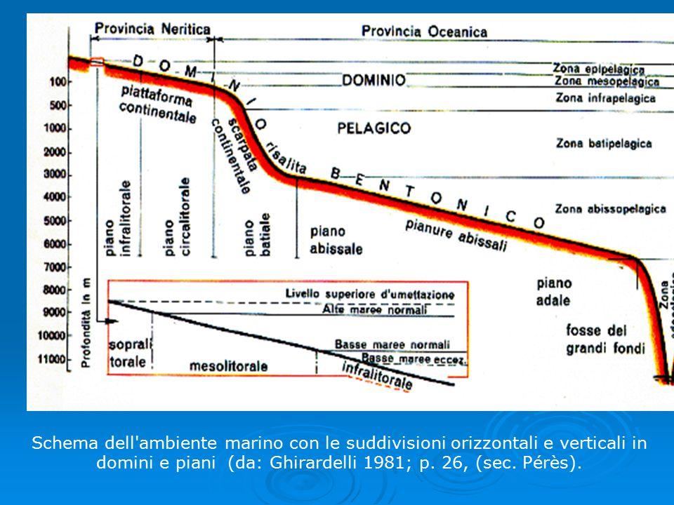 Schema dell ambiente marino con le suddivisioni orizzontali e verticali in domini e piani (da: Ghirardelli 1981; p.