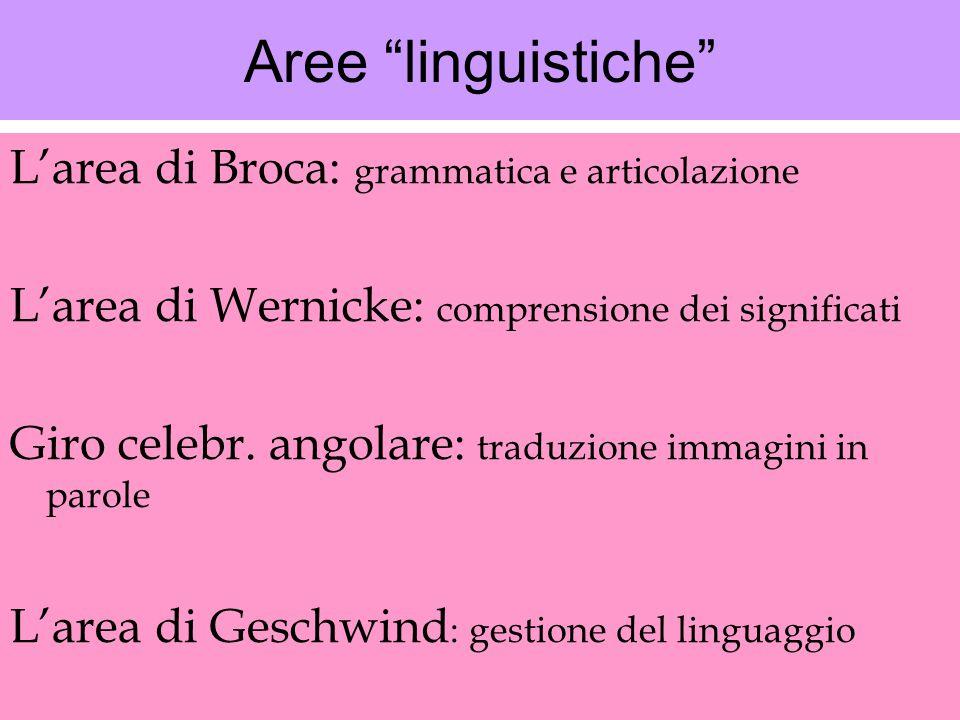 Aree linguistiche L'area di Broca: grammatica e articolazione