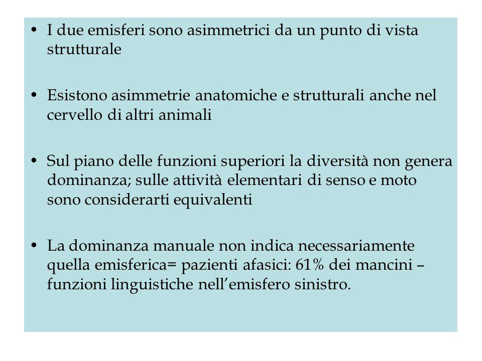 I due emisferi sono asimmetrici da un punto di vista strutturale