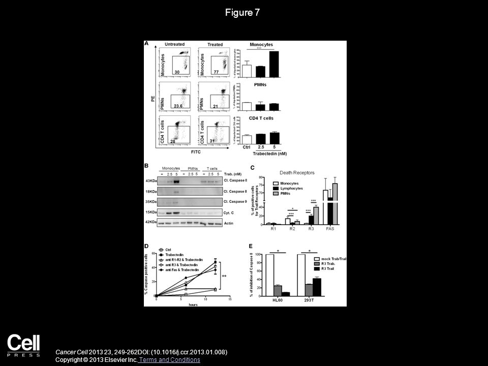 Figure 7 Mechanism of Apoptosis and Selective Effect of Trabectedin on Monocytes.