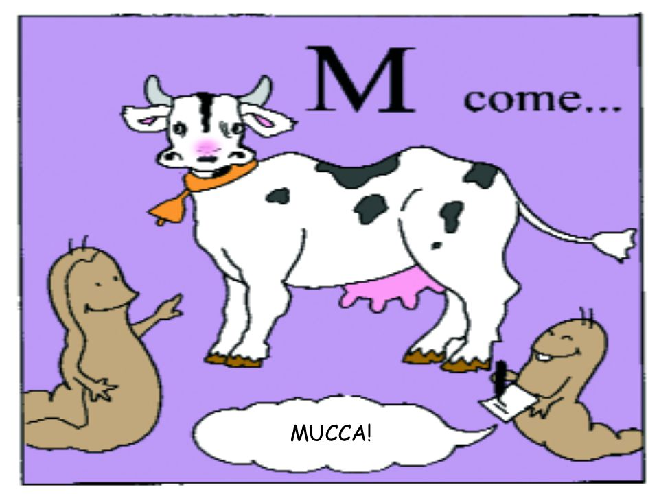 MUCCA!