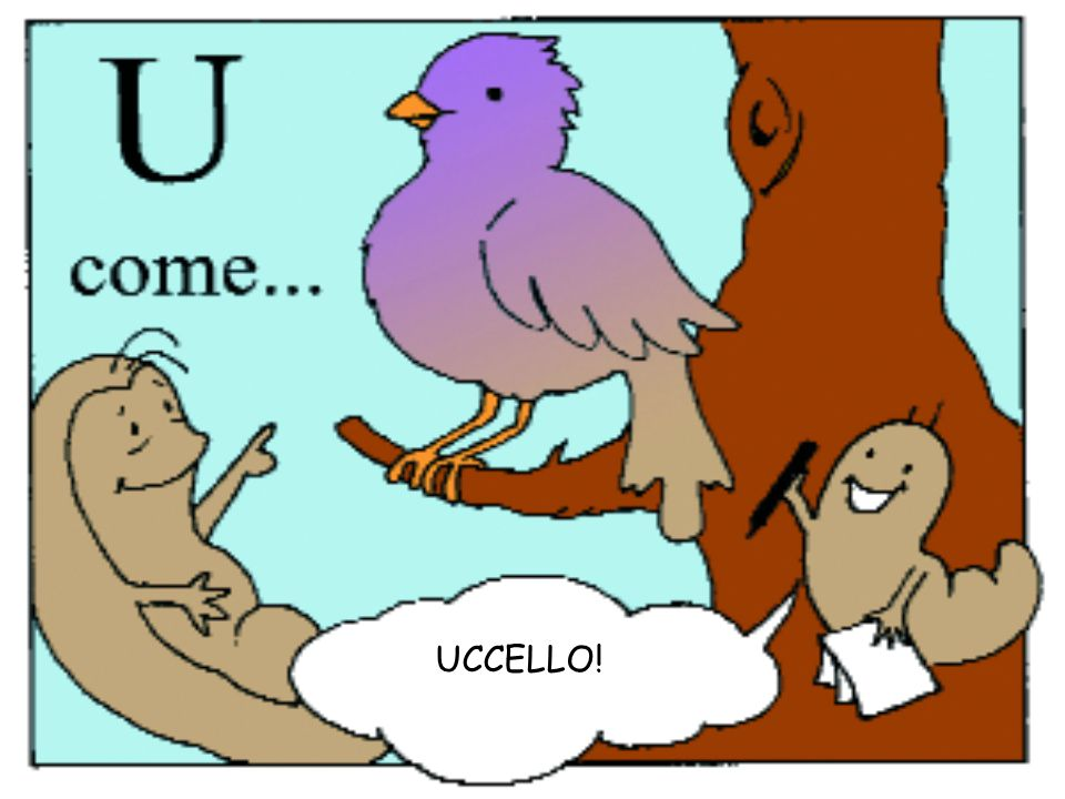 UCCELLO!