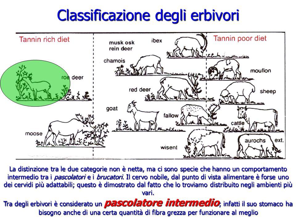 Classificazione degli erbivori