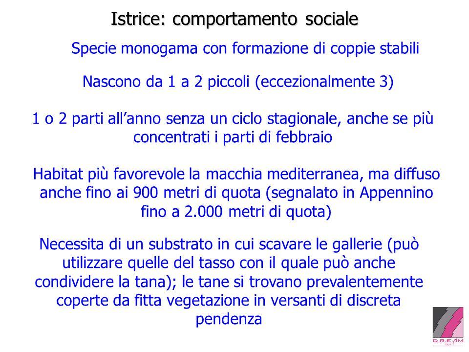 Istrice: comportamento sociale