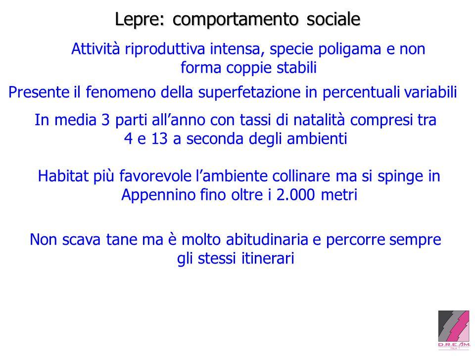 Lepre: comportamento sociale