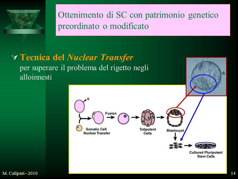 Ottenimento di SC con patrimonio genetico preordinato o modificato