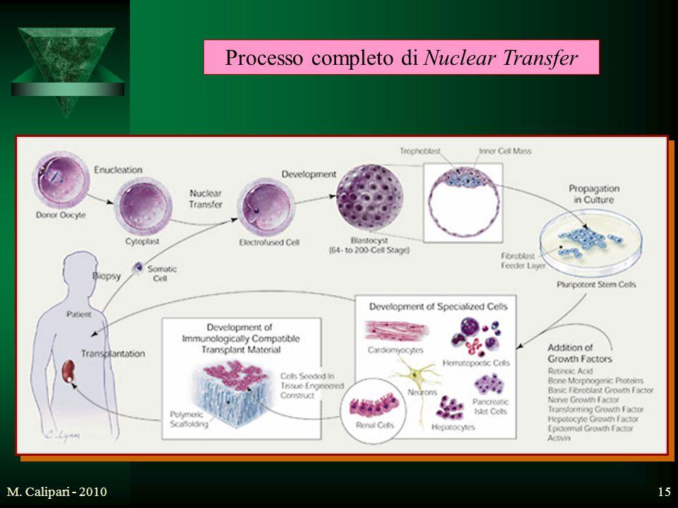 Processo completo di Nuclear Transfer