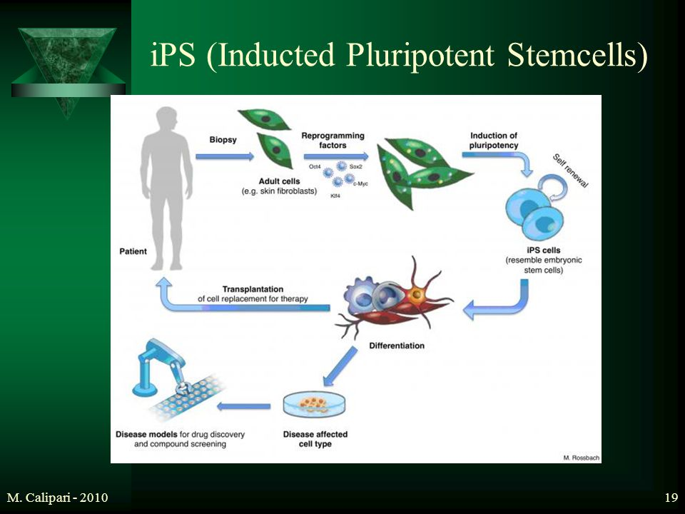 iPS (Inducted Pluripotent Stemcells)