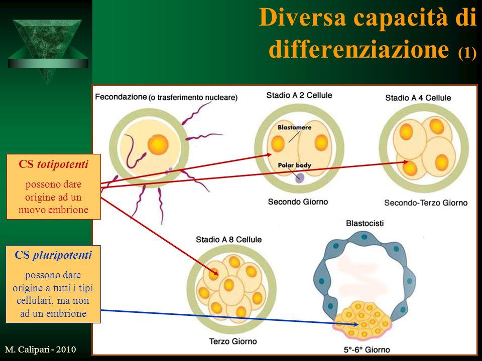 Diversa capacità di differenziazione (1)