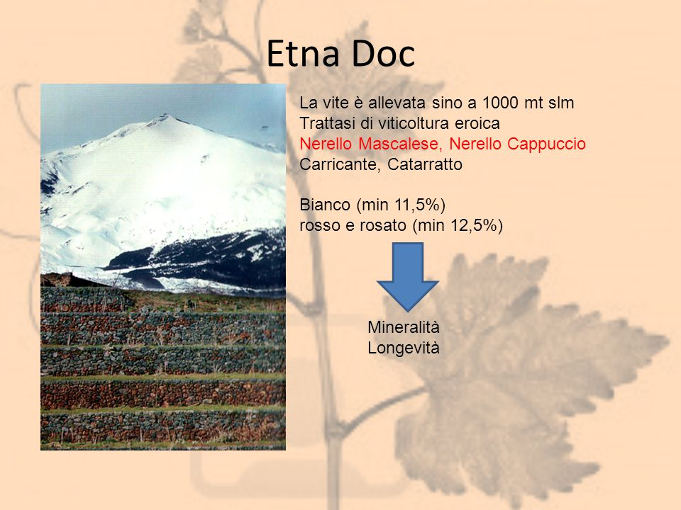 Etna Doc La vite è allevata sino a 1000 mt slm