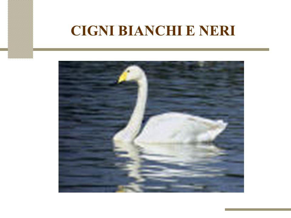 CIGNI BIANCHI E NERI