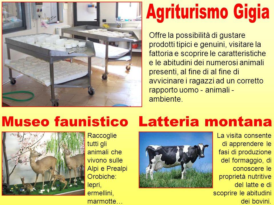 Agriturismo Gigia Museo faunistico Latteria montana