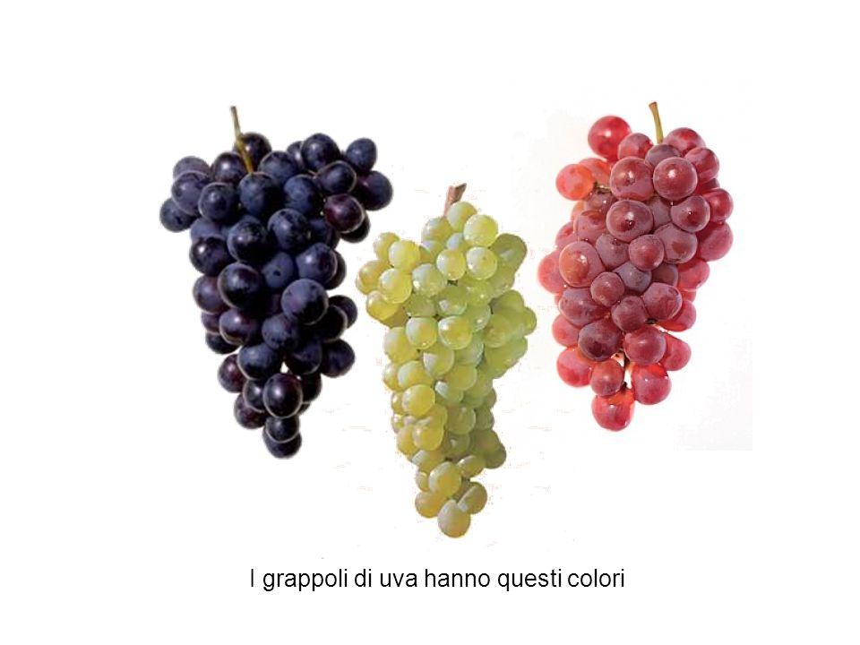 I grappoli di uva hanno questi colori
