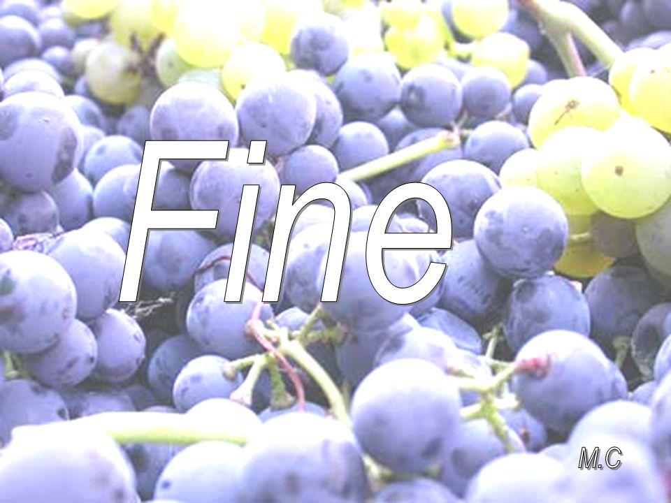 Fine M.C