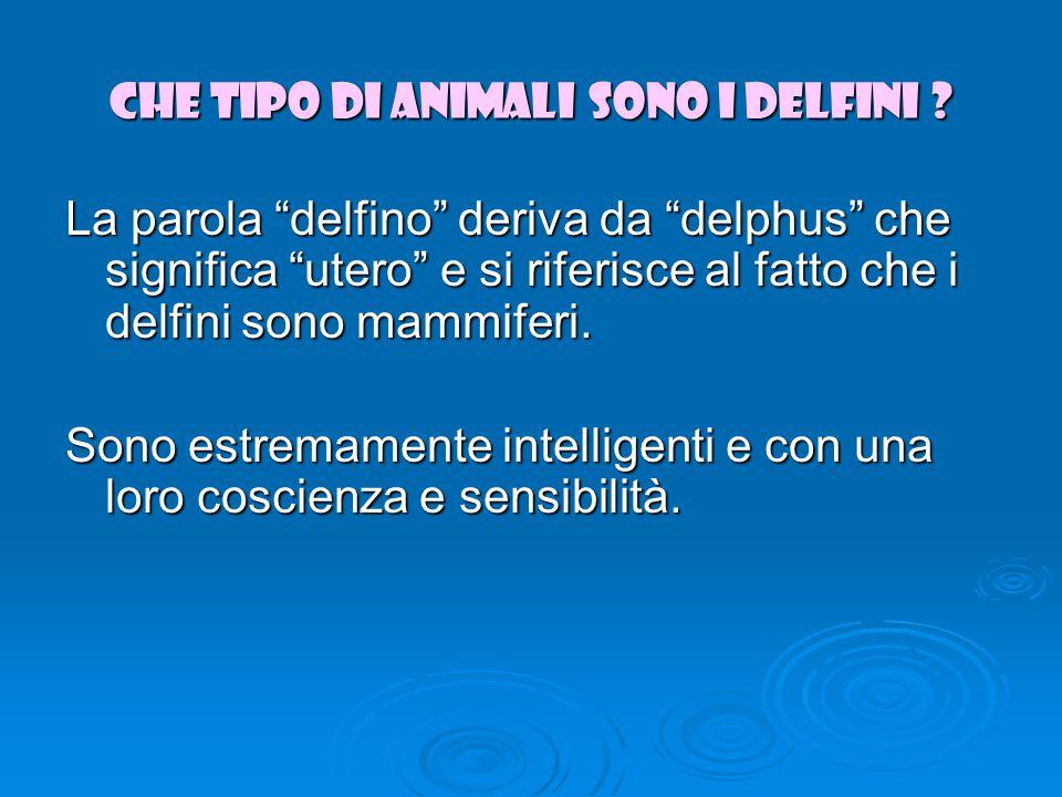 Che tipo di animali sono i delfini