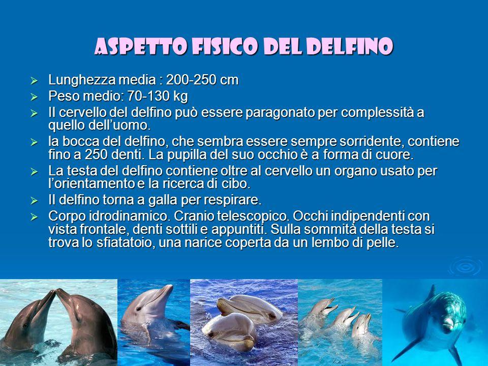 Aspetto fisico del delfino
