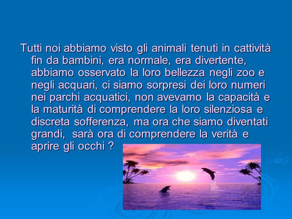 Tutti noi abbiamo visto gli animali tenuti in cattività fin da bambini, era normale, era divertente, abbiamo osservato la loro bellezza negli zoo e negli acquari, ci siamo sorpresi dei loro numeri nei parchi acquatici, non avevamo la capacità e la maturità di comprendere la loro silenziosa e discreta sofferenza, ma ora che siamo diventati grandi, sarà ora di comprendere la verità e aprire gli occhi