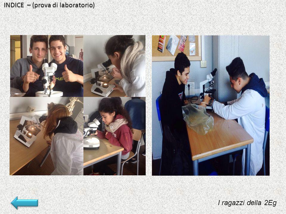 INDICE – (prova di laboratorio)