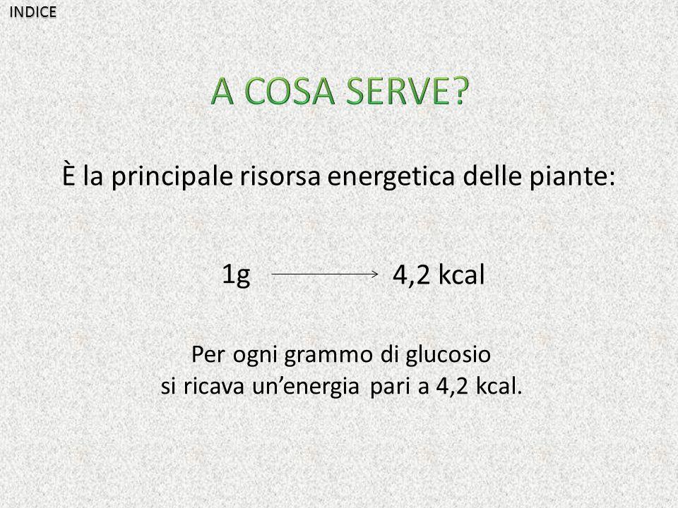 A COSA SERVE È la principale risorsa energetica delle piante: