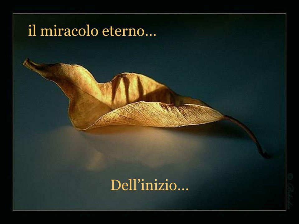 il miracolo eterno… Dell'inizio…