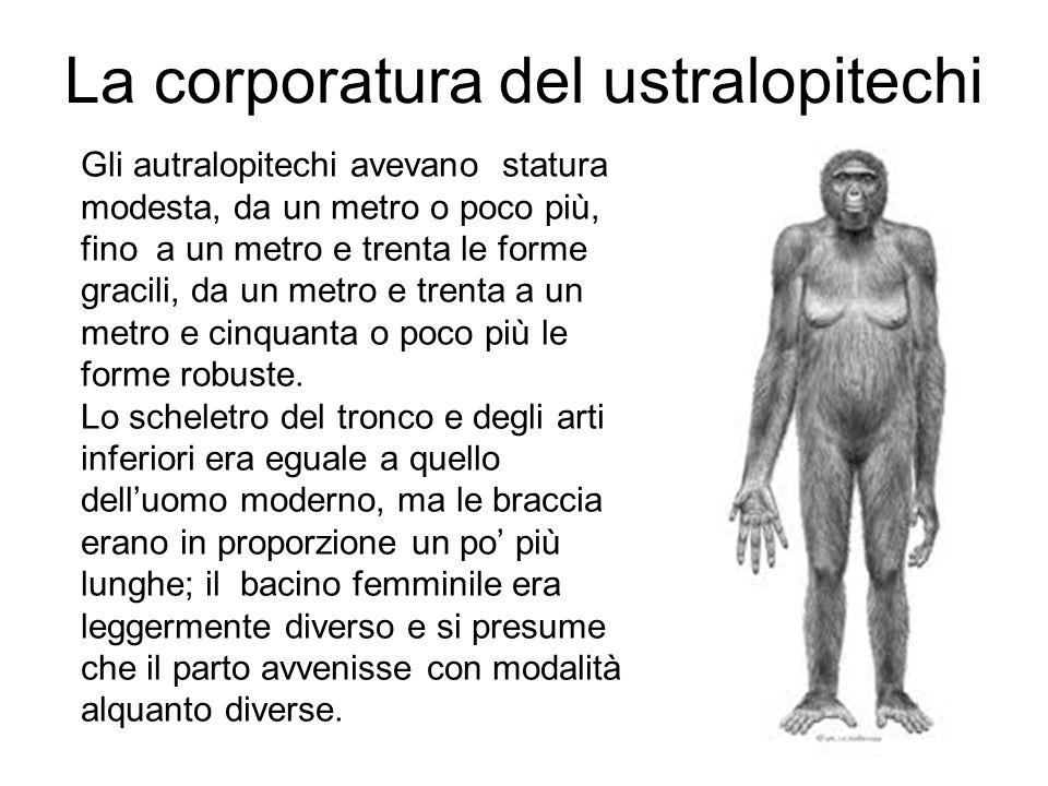 La corporatura del ustralopitechi