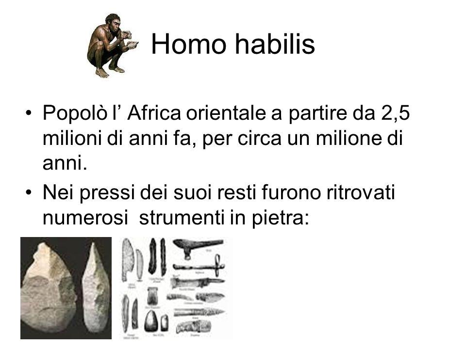 Homo habilis Popolò l' Africa orientale a partire da 2,5 milioni di anni fa, per circa un milione di anni.