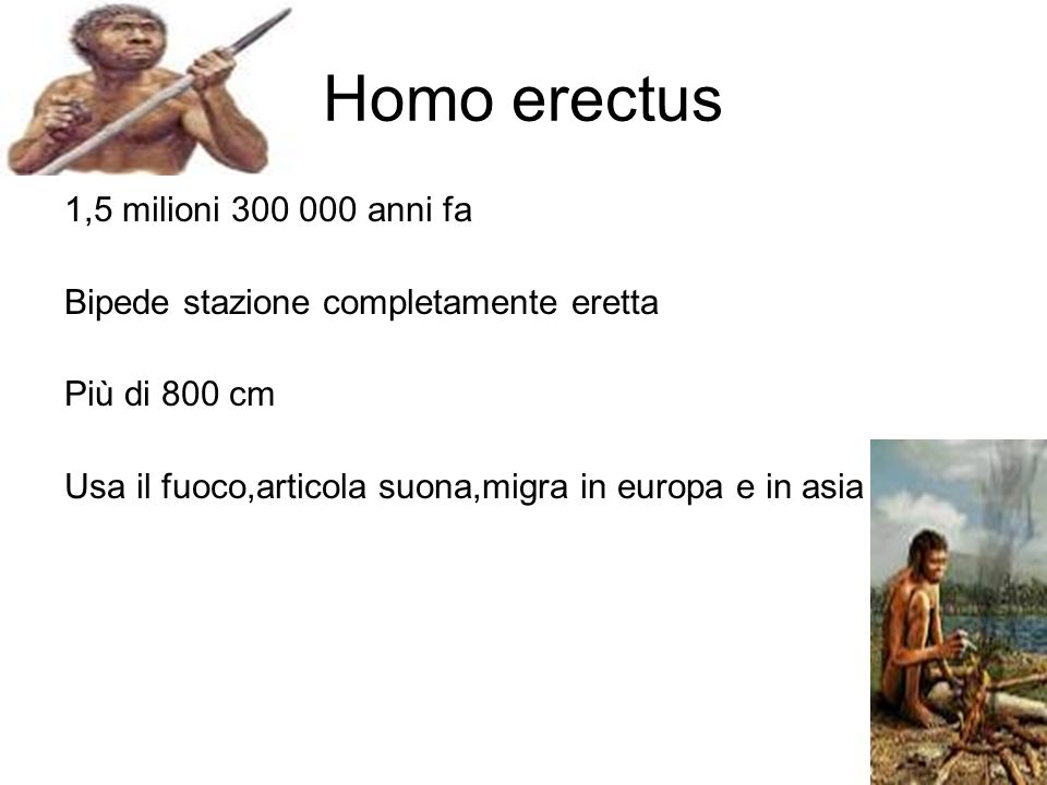 Homo erectus 1,5 milioni 300 000 anni fa