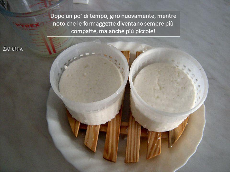 Dopo un po' di tempo, giro nuovamente, mentre noto che le formaggette diventano sempre più compatte, ma anche più piccole!