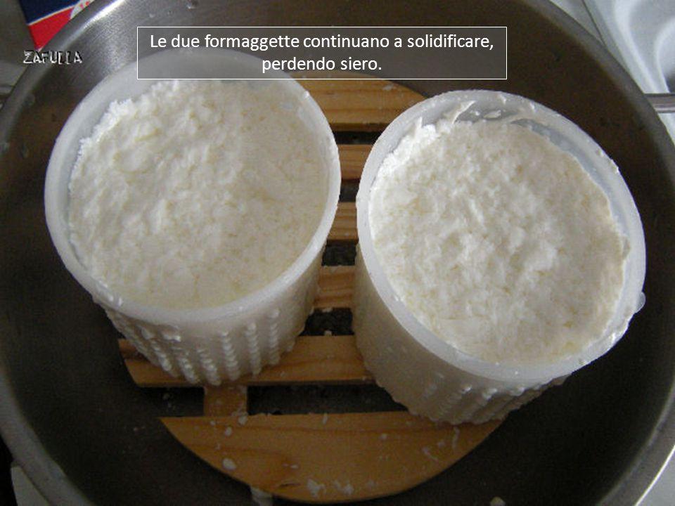 Le due formaggette continuano a solidificare, perdendo siero.