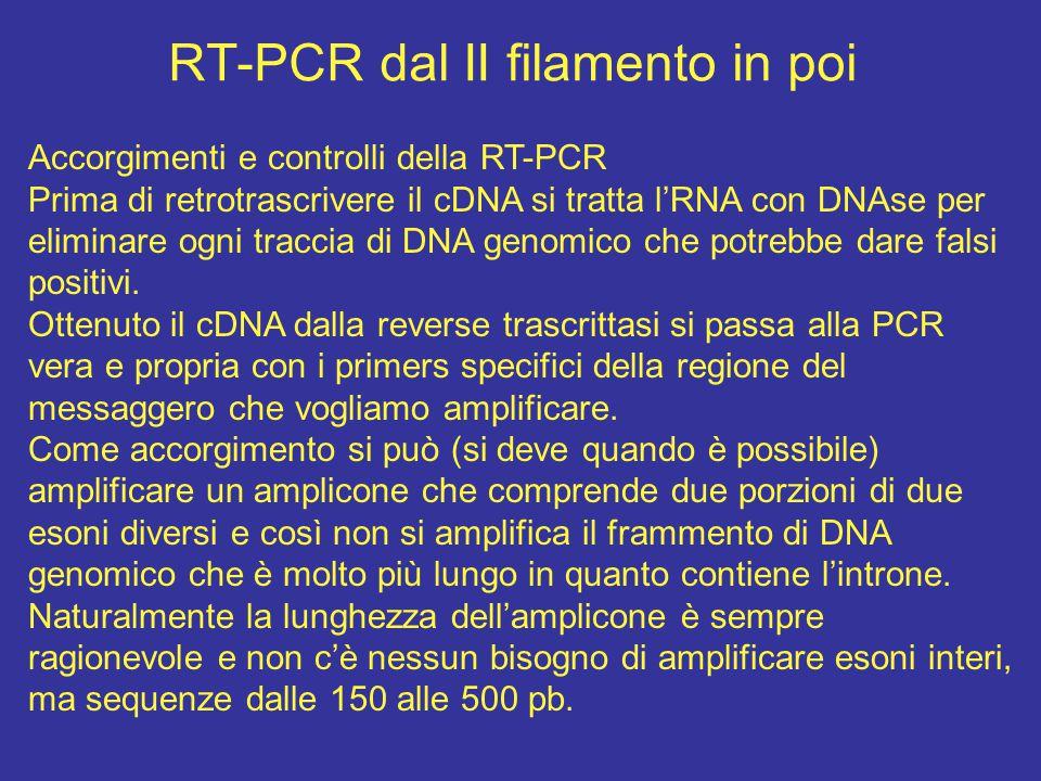 RT-PCR dal II filamento in poi