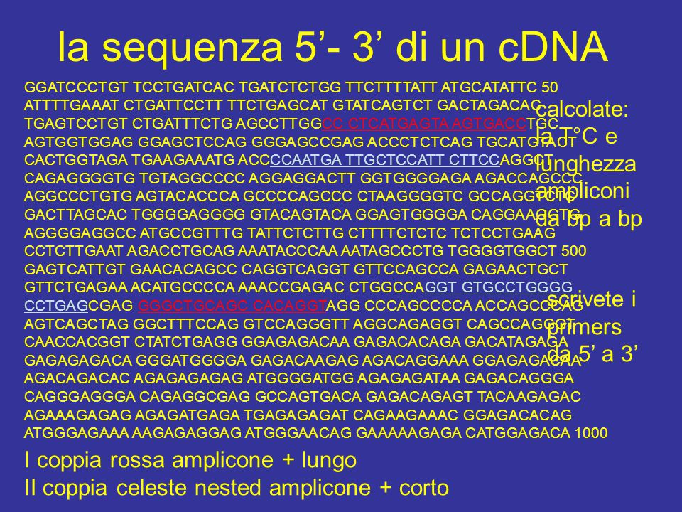 la sequenza 5'- 3' di un cDNA
