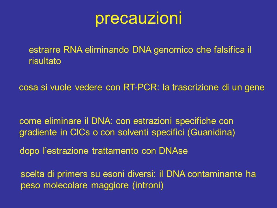 precauzioni estrarre RNA eliminando DNA genomico che falsifica il risultato. cosa si vuole vedere con RT-PCR: la trascrizione di un gene.