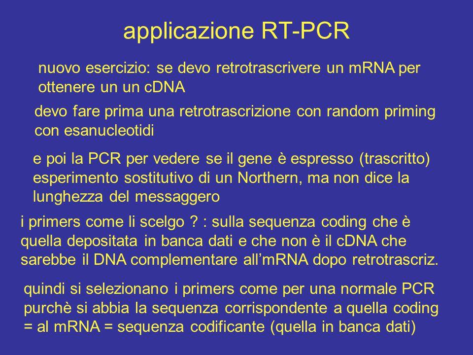 applicazione RT-PCR nuovo esercizio: se devo retrotrascrivere un mRNA per ottenere un un cDNA.