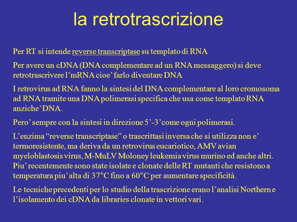 la retrotrascrizione Per RT si intende reverse transcriptase su templato di RNA.