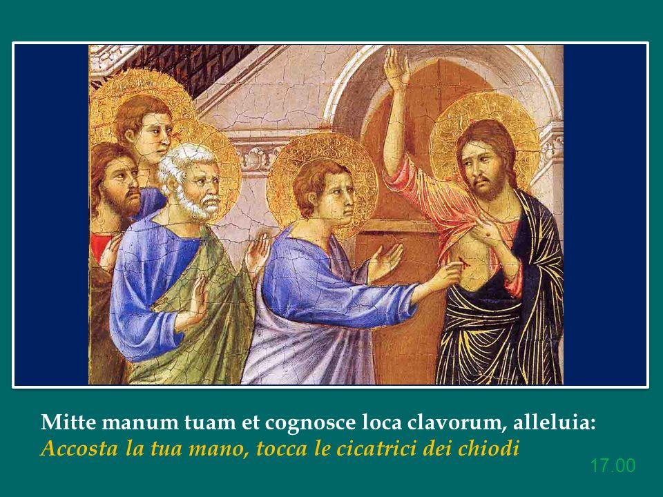 Mitte manum tuam et cognosce loca clavorum, alleluia: