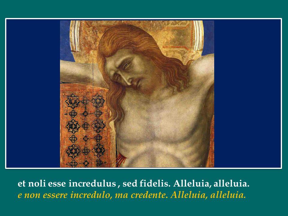 et noli esse incredulus , sed fidelis. Alleluia, alleluia.