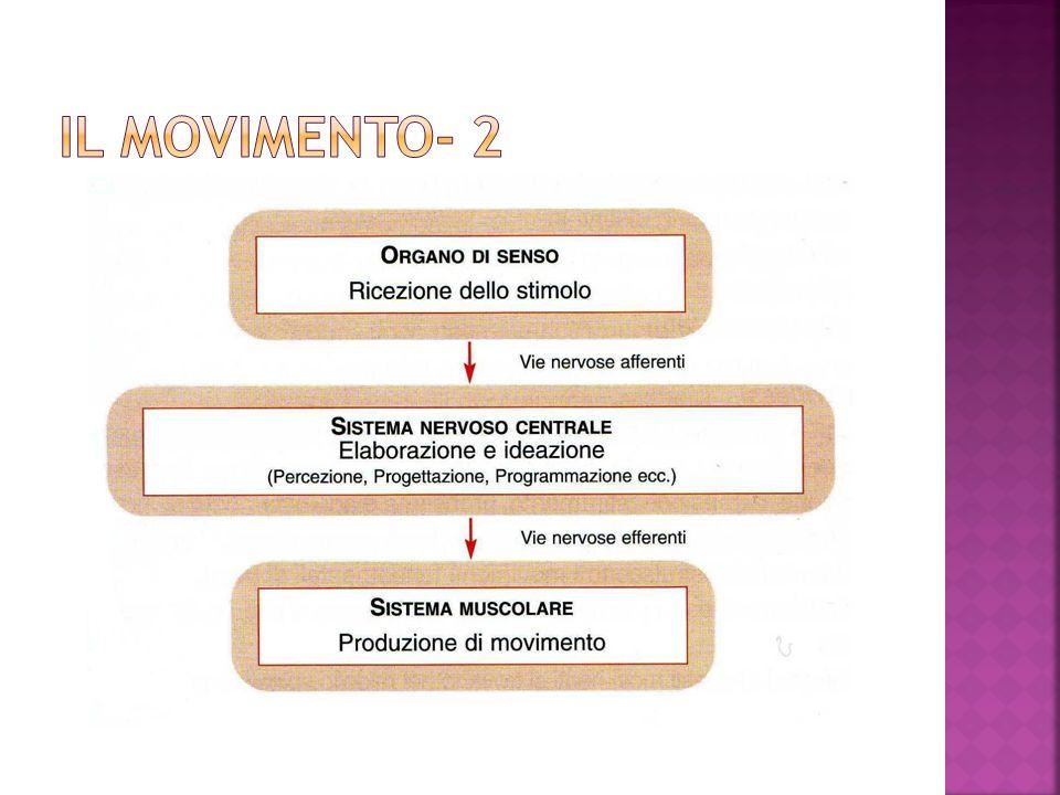 IL MOVIMENTO- 2
