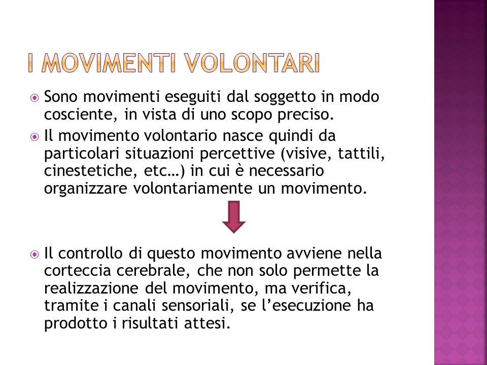 I MOVIMENTI VOLONTARI Sono movimenti eseguiti dal soggetto in modo cosciente, in vista di uno scopo preciso.