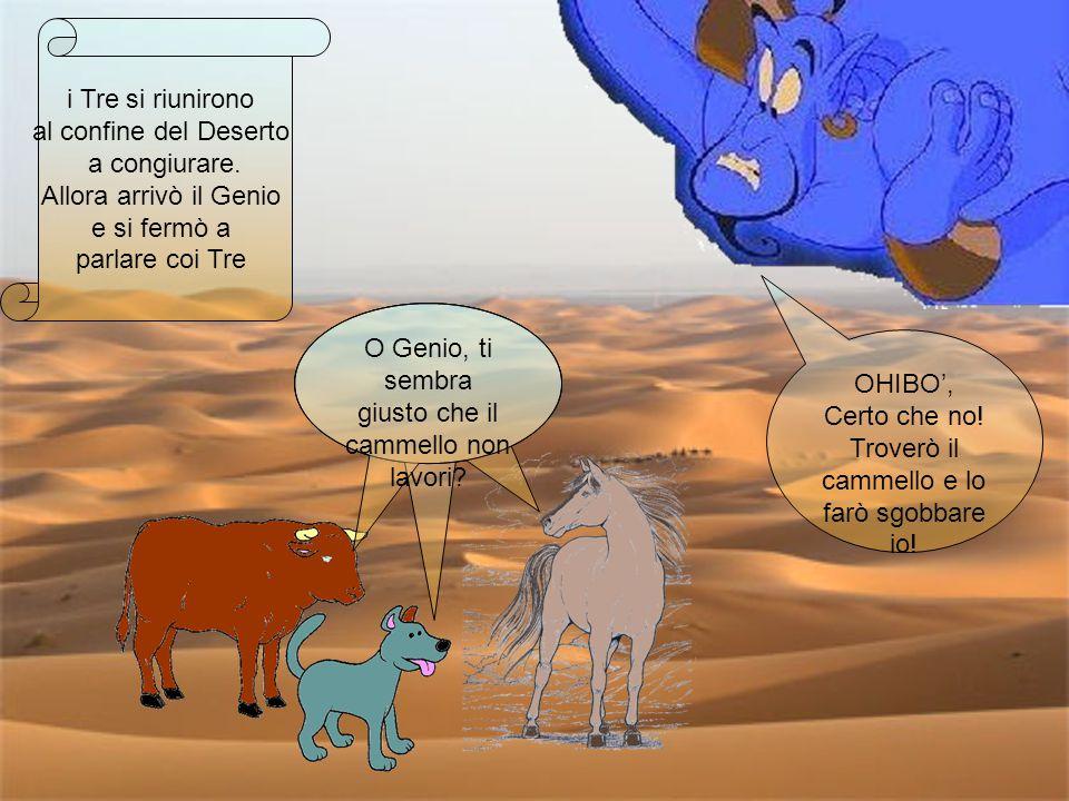O Genio, ti sembra giusto che il cammello non lavori OHIBO',