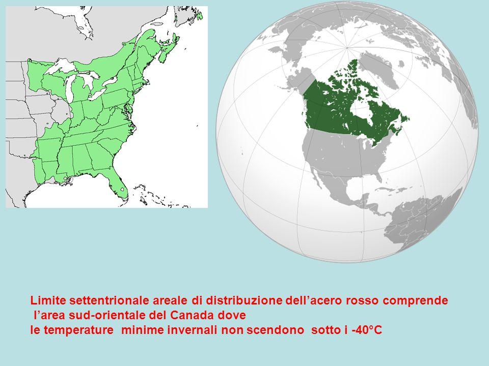 Limite settentrionale areale di distribuzione dell'acero rosso comprende