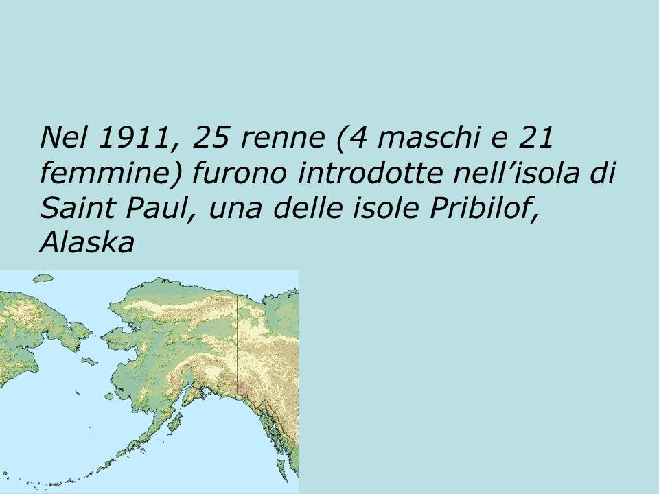 Nel 1911, 25 renne (4 maschi e 21 femmine) furono introdotte nell'isola di Saint Paul, una delle isole Pribilof, Alaska