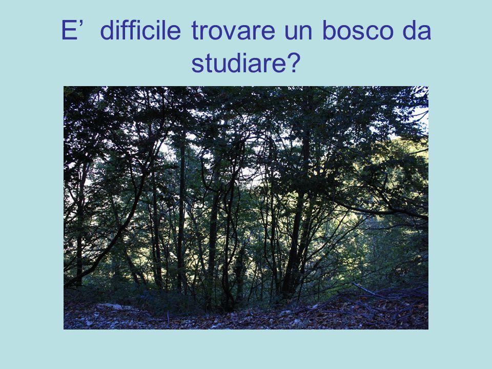 E' difficile trovare un bosco da studiare