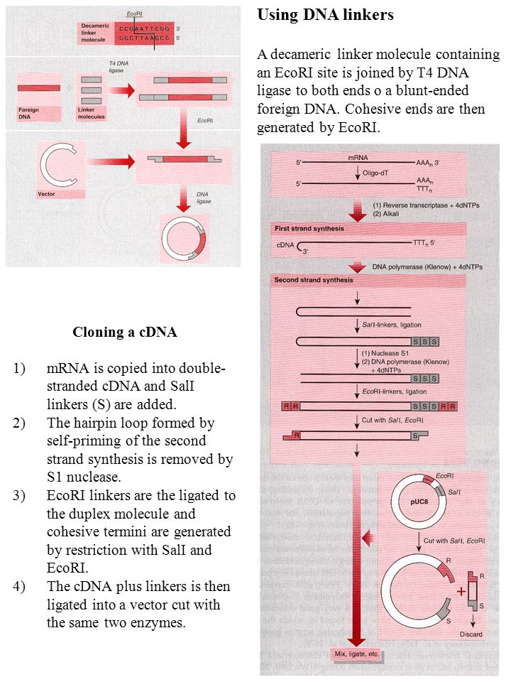 Using DNA linkers