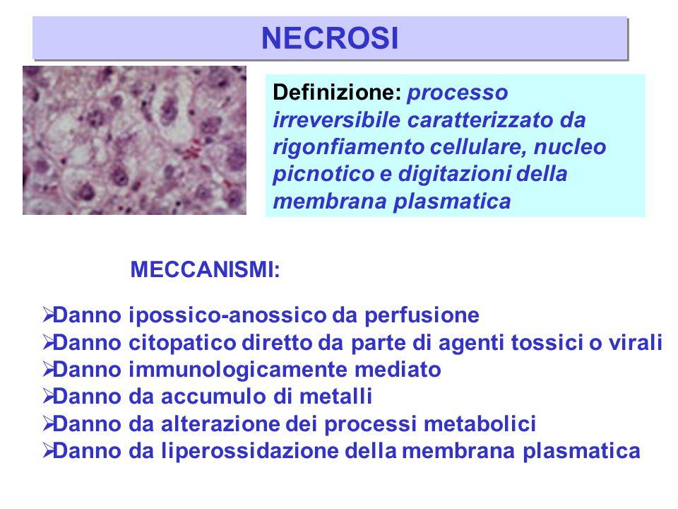 NECROSI Definizione: processo irreversibile caratterizzato da rigonfiamento cellulare, nucleo picnotico e digitazioni della membrana plasmatica.