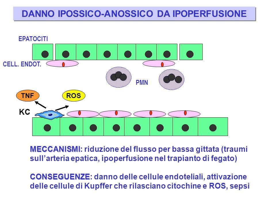 DANNO IPOSSICO-ANOSSICO DA IPOPERFUSIONE