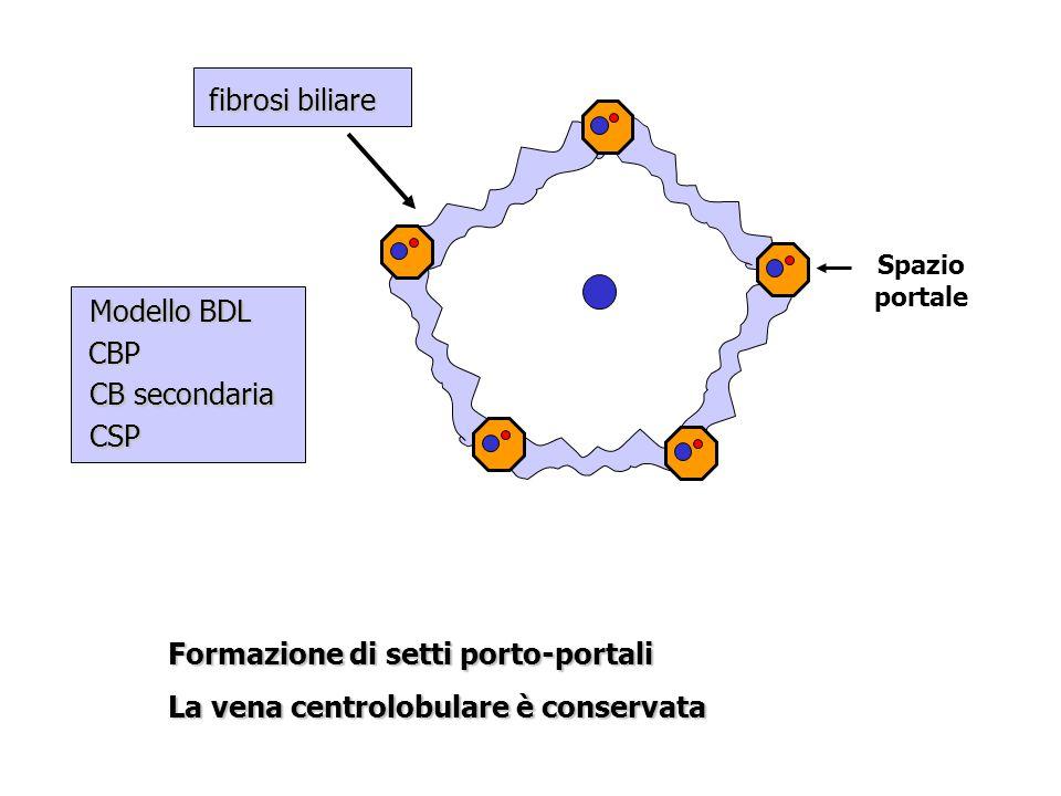Formazione di setti porto-portali La vena centrolobulare è conservata