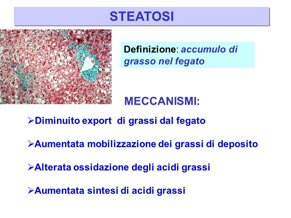 STEATOSI MECCANISMI: Definizione: accumulo di grasso nel fegato